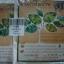 41-413-6300-0 ชาผักพื้นบ้าน 9 ชนิด สุขภาพทางเลือก (ใจประนม) แพ็ค*6ห thumbnail 1